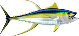 Yellow fin Tuna x2 Stickers,Decal,Boat,Fishing,All Sizes,PVC